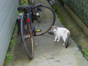 猫にゃん@大間