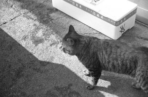 T-MAX ISO400