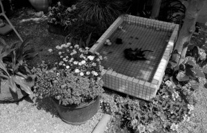 Leica R6.2+Elmarit35mmF2.8
