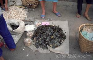 これは何でしょう@重慶自由市場