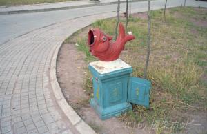 魚のゴミ箱@重慶から上海へ