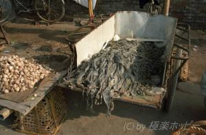海帯@揚州自由市場