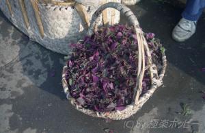 紅米莧@揚州自由市場