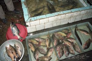 魚介、肉@慶城寺市場