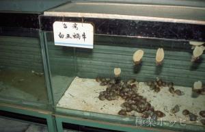 朝食@瀋陽中山大酒店